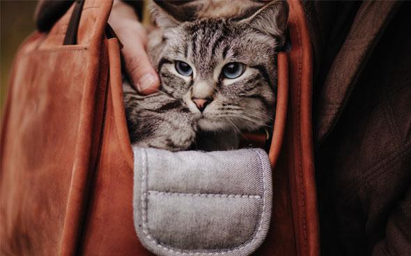 Look Book Pet Carrier